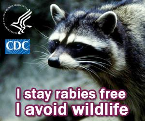 rabies wildlife pic
